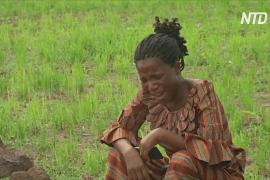 Новое похищение школьников в Нигерии: боевики увезли около 150 детей