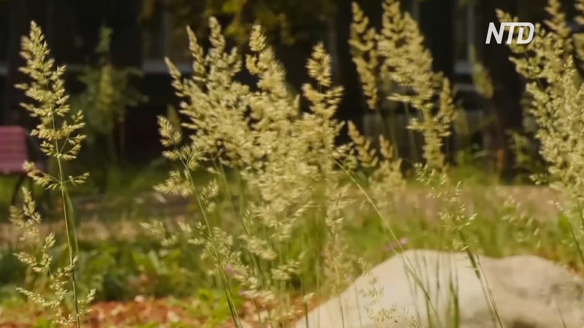 Мини-сады с полевыми цветами улучшат жизнь бабочек и пчёл в Москве