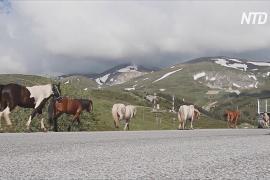Живописный горный район Северной Македонии станет национальным парком
