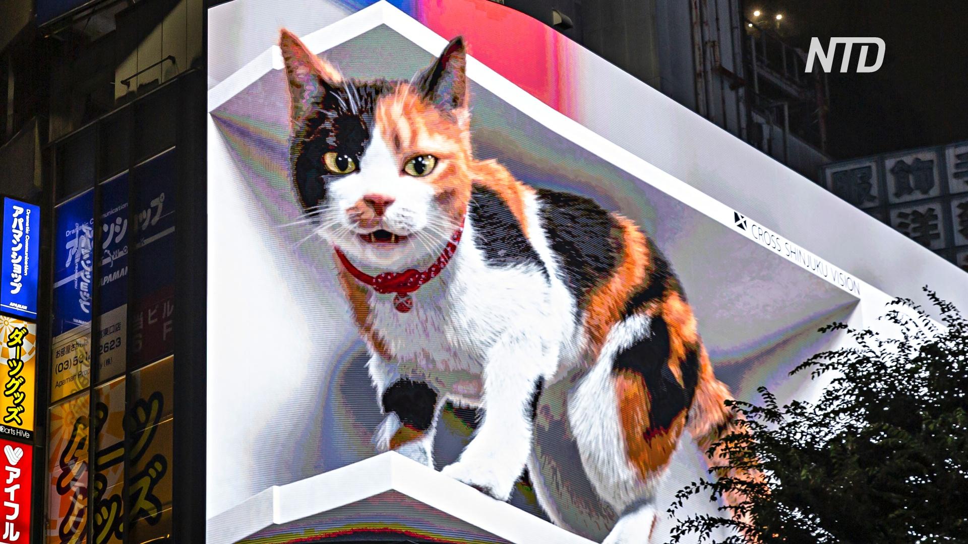 На здании в Токио поселилась огромная кошка