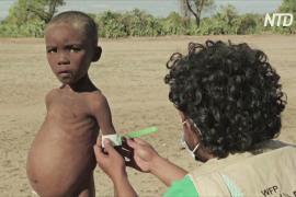 Отчёт ООН: голод в мире стал масштабнее из-за пандемии