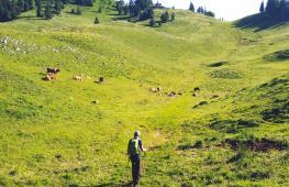 Через Альпы несмотря на болезнь Паркинсона: швейцарец бросил вызов себе