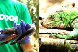 Вернулись домой: 2000 конфискованных рептилий и амфибий выпустили на волю в Колумбии