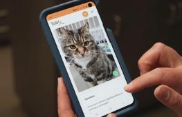 Новое приложение расшифровывает чувства кошек
