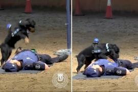 Щенок делает искусственное дыхание офицеру. Весёлое видео