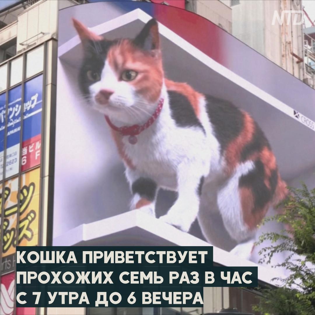 Гигантская 3D-кошка: токийцы в шоке от нового билборда