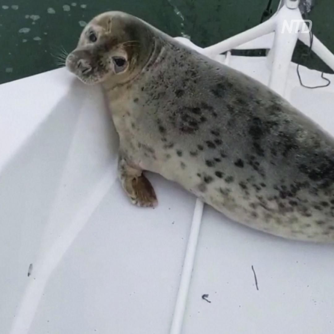Непрошеный пассажир: тюлень забрался на тримаран во время регаты