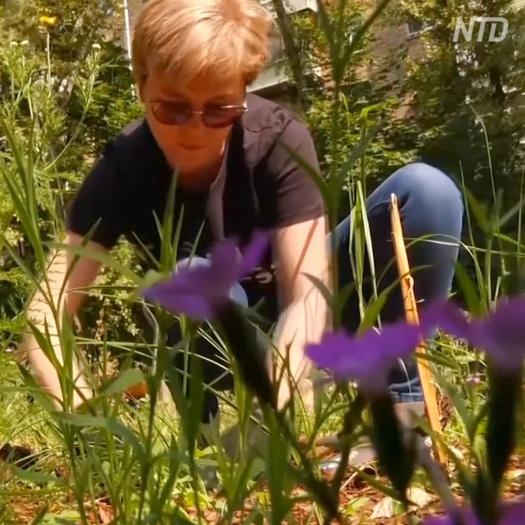 Мини-сады с полевыми цветами разбили в московском дворе
