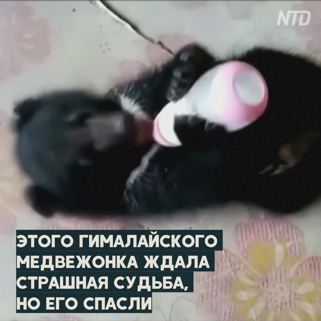 Как медвежонка спасли из рук браконьеров и готовят к жизни на воле