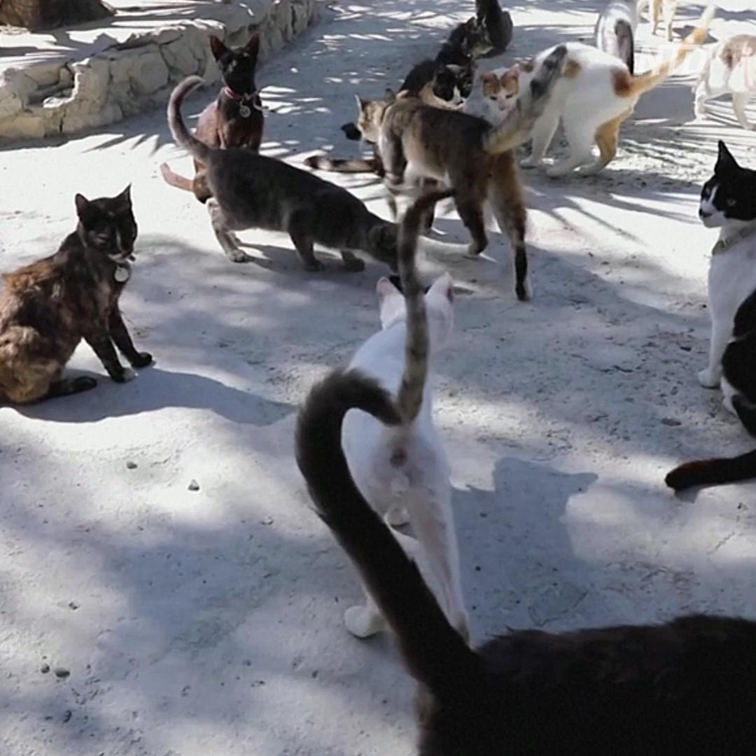 Кипр переживает нашествие бездомных кошек