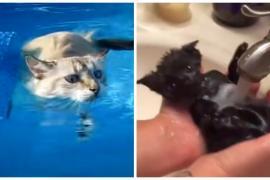 Как помочь кошке полюбить воду