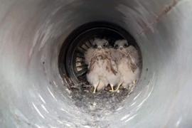 Сопло реактивного самолета стало домом для птенцов