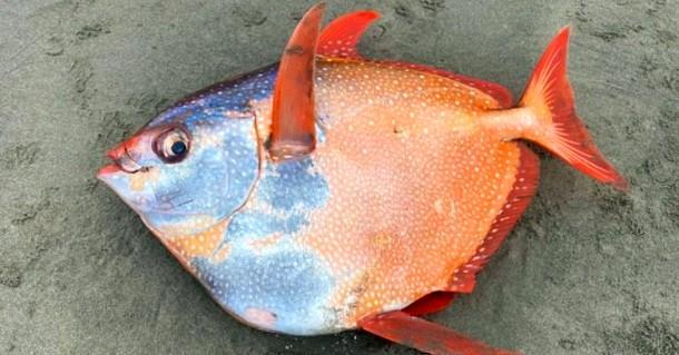 Огромную тропическую рыбу обнаружили в штате Орегон