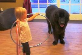 Может ли ребёнок научить собаку крутить обруч? Весёлое видео
