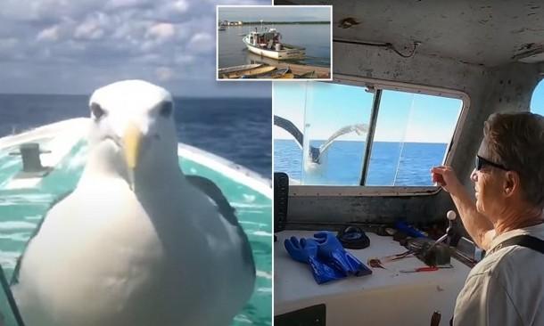 Дружба чайки и моряка длится 15 лет
