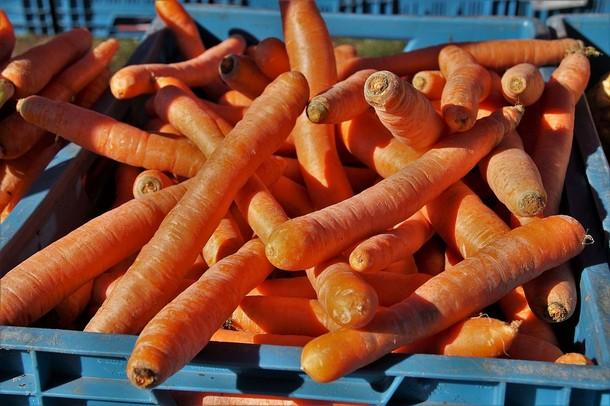 16 1 - Морковь: польза и вред