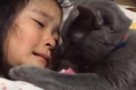 Как кошка утешает плачущую девочку