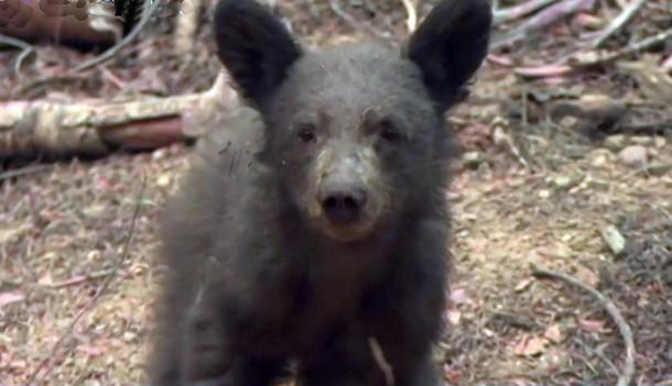 2021 08 19 195430 - Калифорния: в сгоревшем лесу находят медвежат