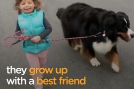 Как маленькие дети дружат с собаками. Весёлое видео.