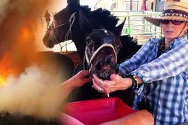 Крем и холодные ванны: обгоревших лошадей лечат на ранчо в США