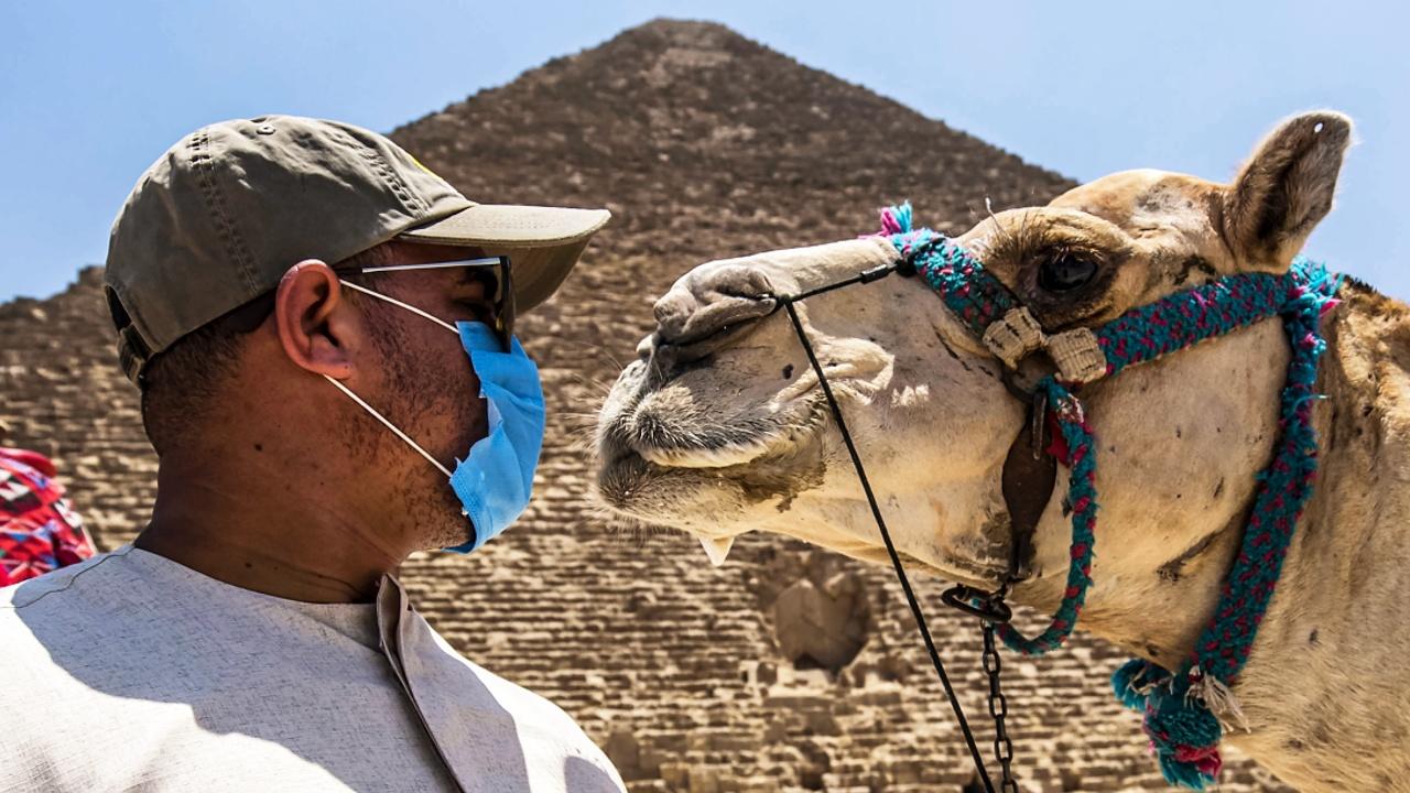 Цветы и подарки: на египетских курортах снова встречают российских туристов