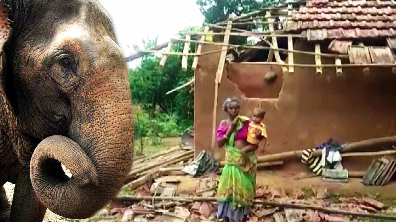 Напуганные слоны топчут деревни в Индии