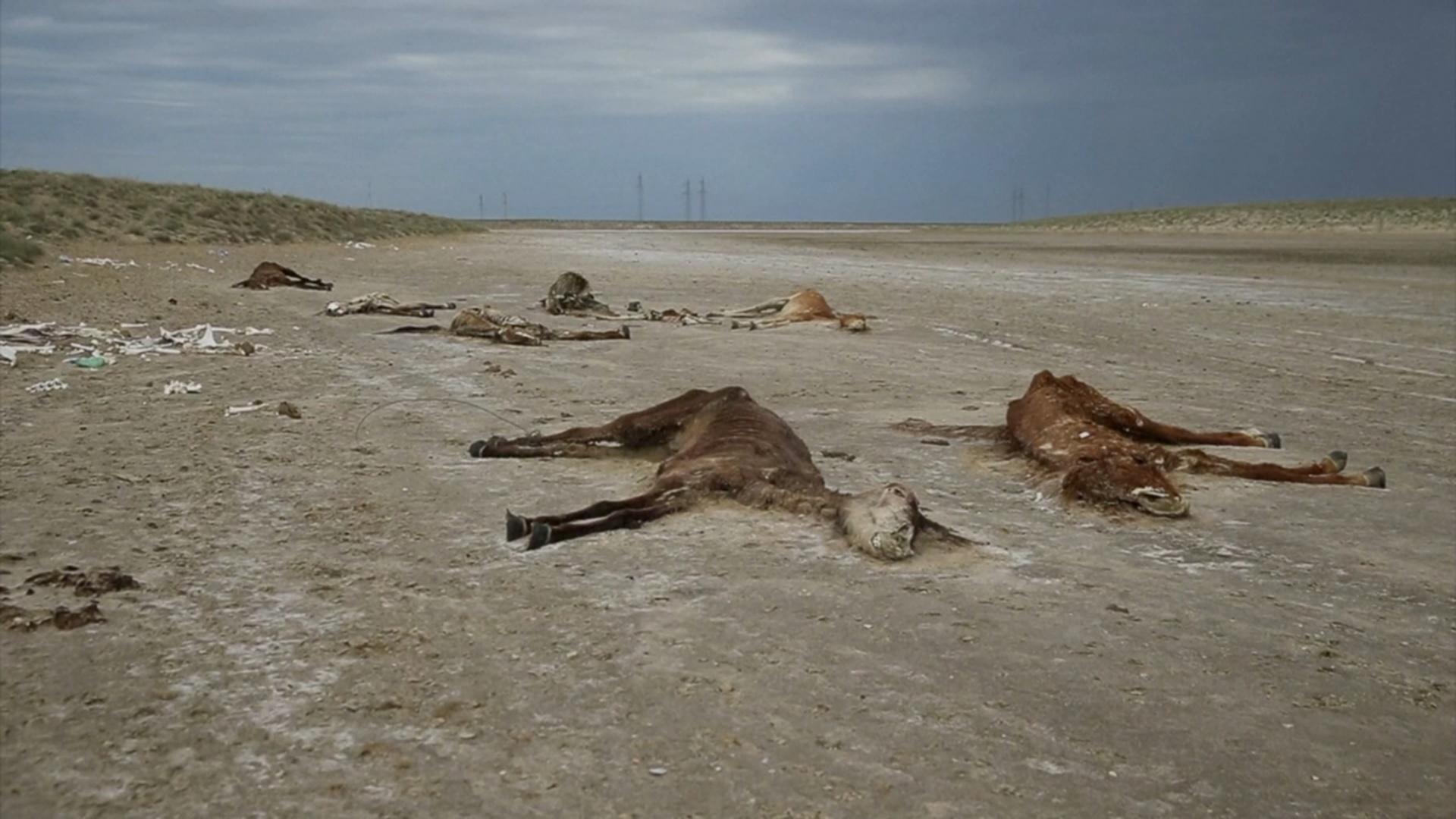 Выжженная степь: в Казахстане лошади умирают от голода и жажды
