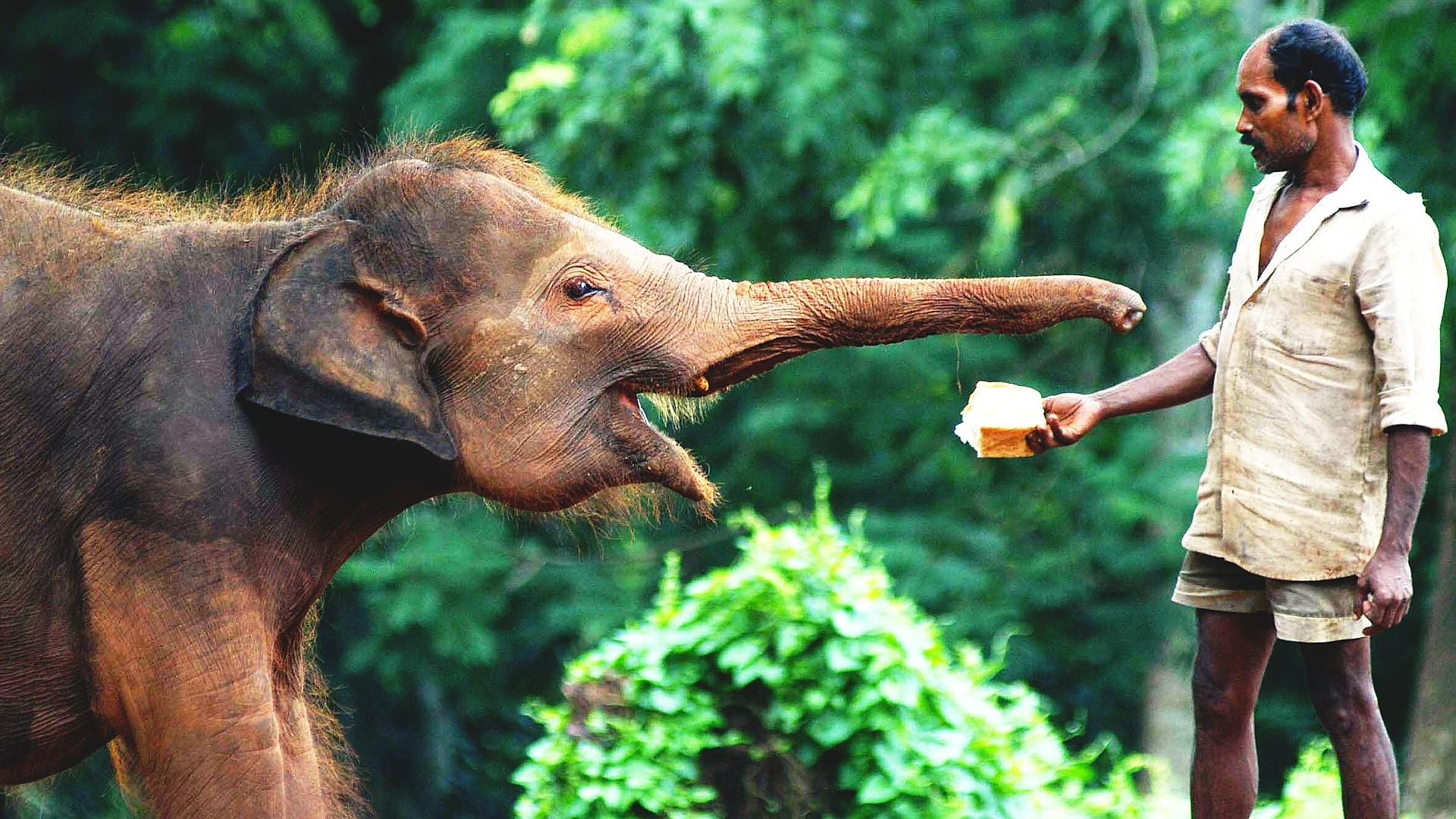 Как в Индии и Кении отмечают Всемирный день слона