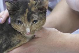 Волонтёры спасли шесть кошек в сгоревшем якутском селе