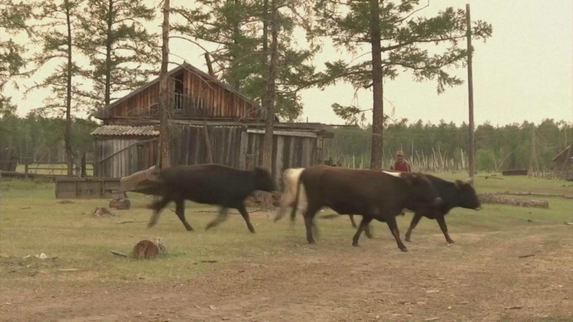 Сибирские деревни учатся жить в окружении горящих лесов