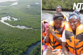 Как мангровые леса спасают деревни