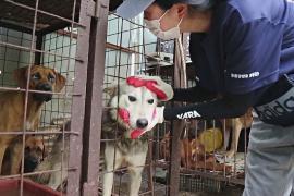 В Южной Корее будут строже наказывать за жестокое обращение с животными