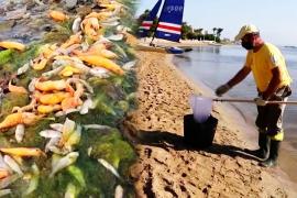 20 тонн мёртвой рыбы прибило к испанскому побережью