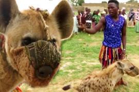 «Люди-гиены» могут исчезнуть в Нигерии из-за недовольства зоозащитников