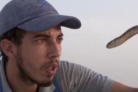 Тунисский ютубер ловит ядовитых змей, чтобы снимать познавательные ролики