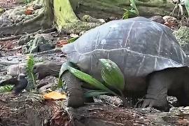 Черепаха, убившая птицу, поразила учёных