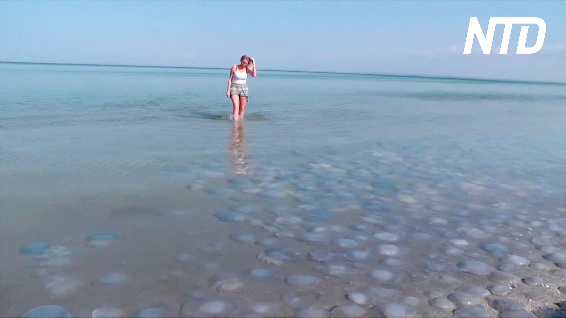 Нашествие медуз на побережье Азовского моря в Крыму отпугивает туристов