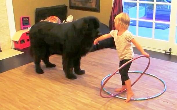 3 7 - Может ли ребёнок научить собаку крутить обруч? Весёлое видео