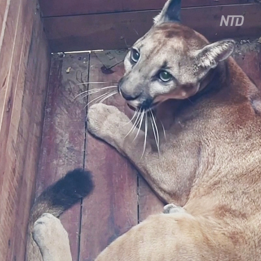 100 животных выпустили в дикую природу в Колумбии