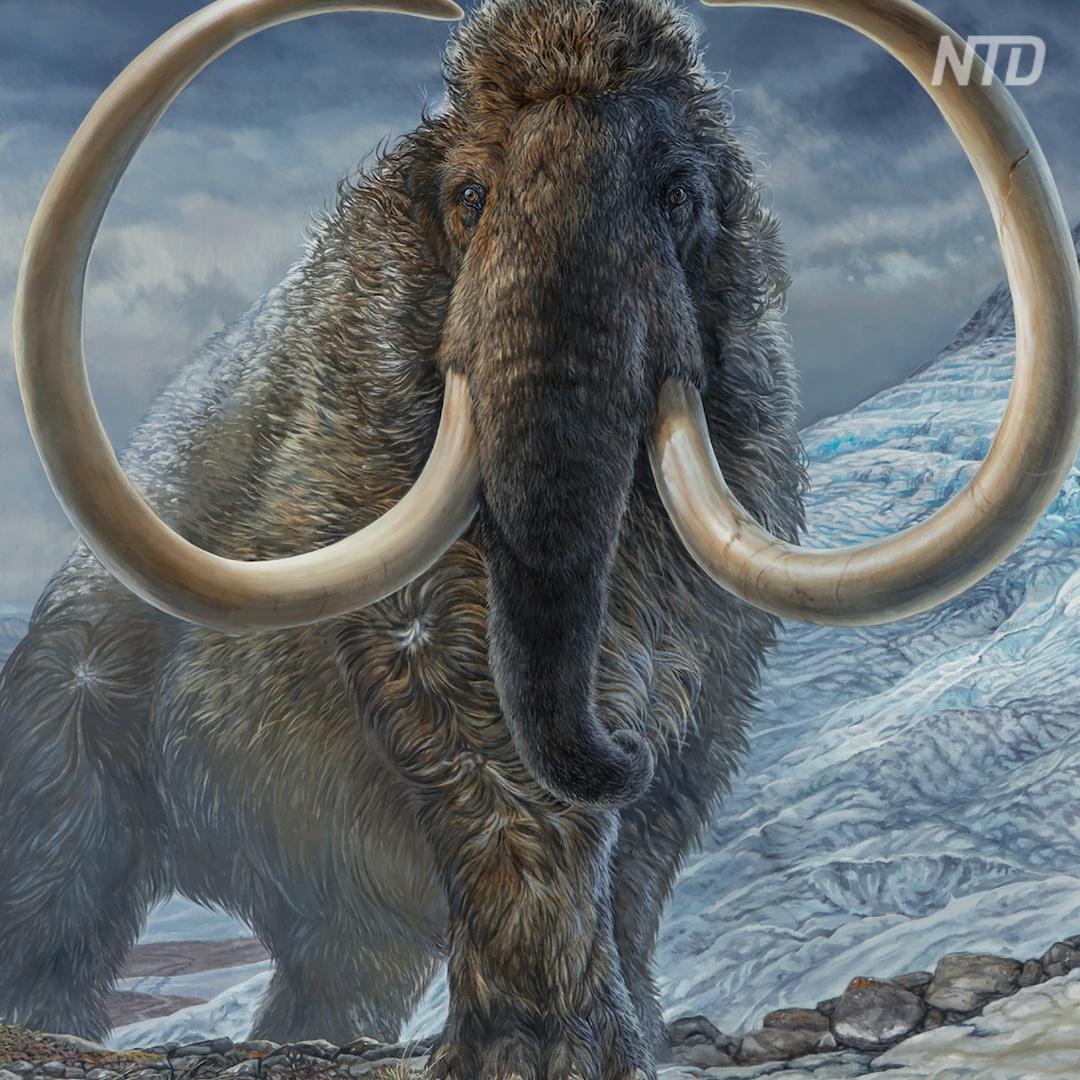 Что рассказал бивень мамонта, жившего 17 тыс. лет назад