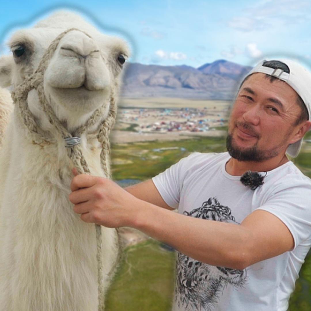 Где на Алтае разводят верблюдов и приглашают туристов