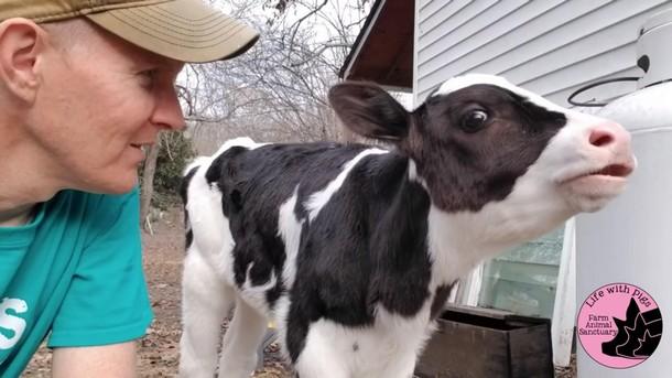 1 5 - Почему корова ведёт себя как собака