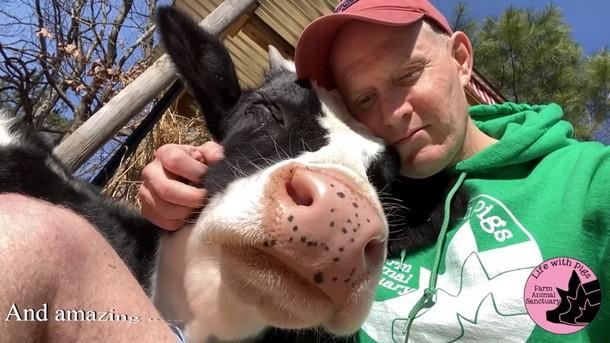 11 2 - Почему корова ведёт себя как собака