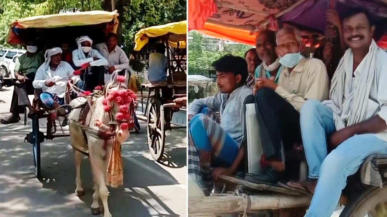 В индийском городе вскоре могут пропасть конные повозки