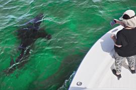 Посмотреть на акулу: как из опасности сделали преимущество