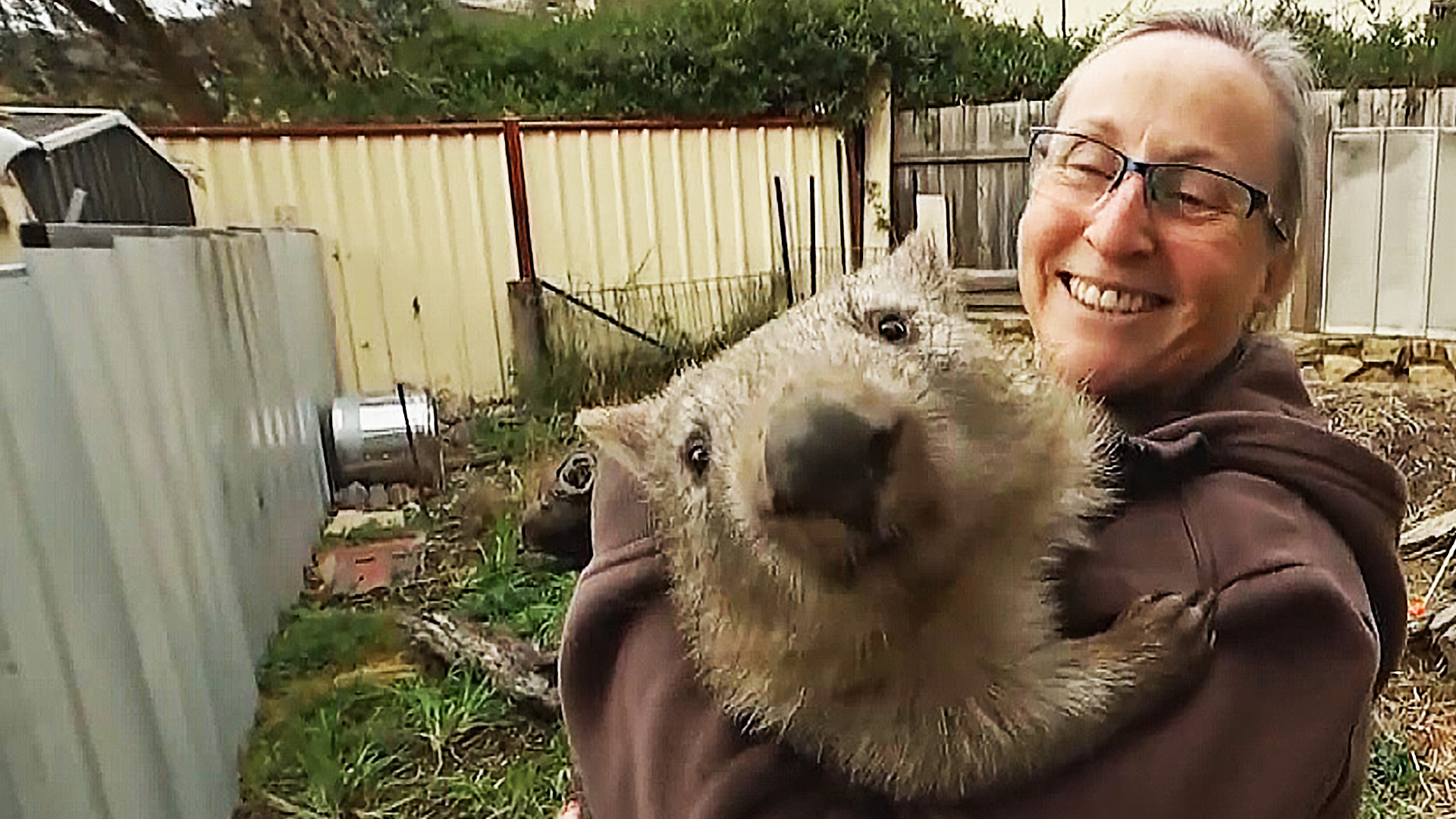 1000 зверей за год спасла группа зоозащитников и получила награду