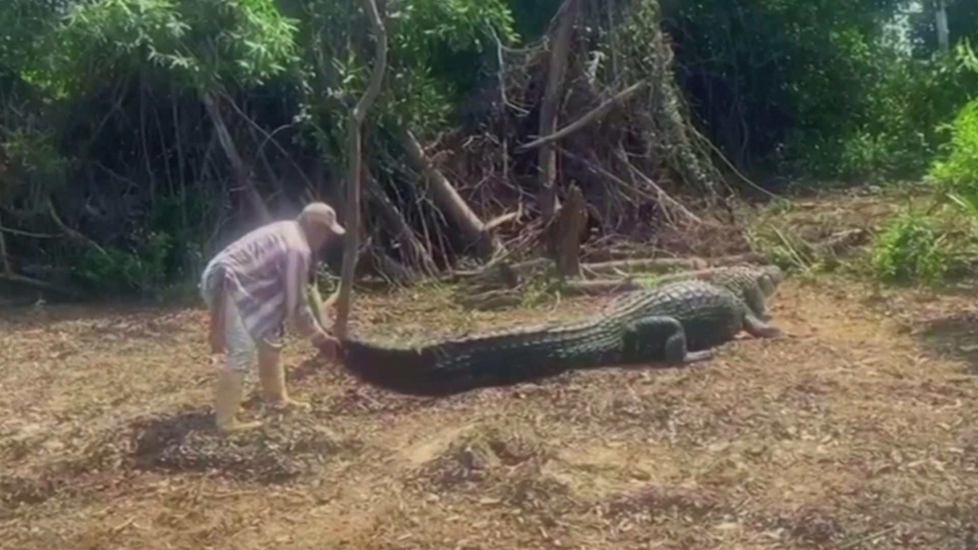 Потаскать за хвост: как боливийский гид дружит с диким крокодилом