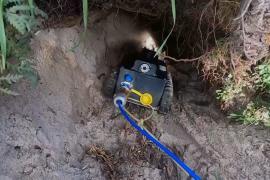 Робот будет исследовать норы вомбатов, чтобы спасти их от клещей