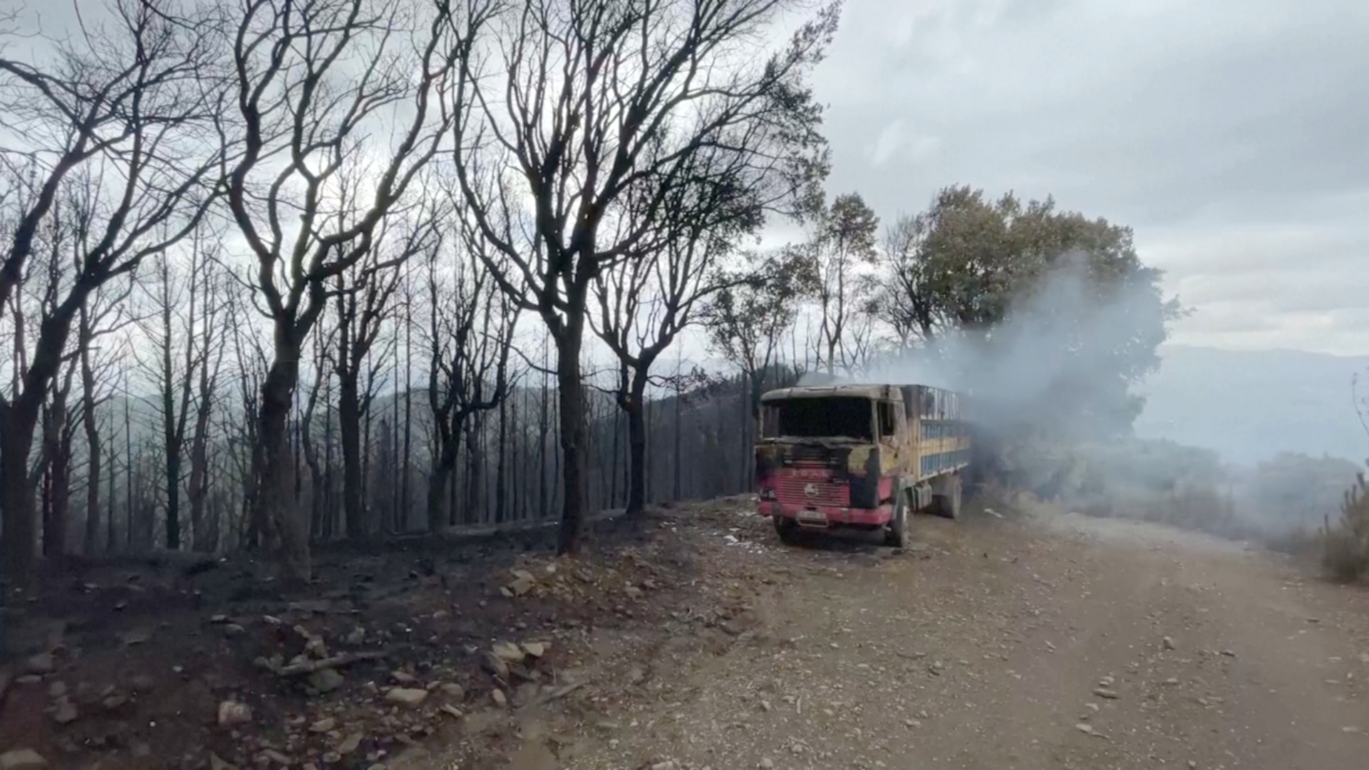 Ветеринары вышли искать обгоревших животных после пожара в Испании