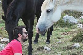 Одичавшие лошади в Боснии одних радуют, а другим приносят беды